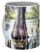Florida Cypress, Hillsborough River, Fl Coffee Mug