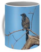 Florida Scrub Jay Watching The Lay Of The Scrub Coffee Mug