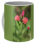 Florida Tasselflower Coffee Mug