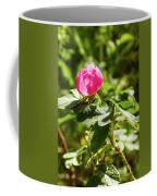 Flower Of Eglantine - 2 Coffee Mug