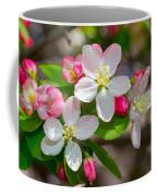 Flowering Cherry Tree Blossoms Coffee Mug