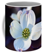 Flowering Dogwood Coffee Mug