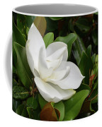 Flowering White Magnolia Blossom On A Magnolia Tree Coffee Mug