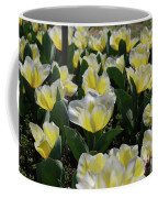 Flowering Yellow And White Tulips In A Spring Garden  Coffee Mug