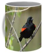 Fluffed Red-winged Blackbird Coffee Mug
