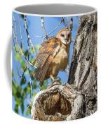 Fluffed Up Barn Owl Owlet Coffee Mug