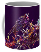 Fly Insect Nature Macro Close  Coffee Mug