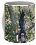 Silky Flycatcher Coffee Mug