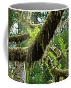 Forest Ferns Art Prints Fern Giclee Prints Baslee Troutman Coffee Mug