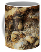 Fossil Shells Coffee Mug