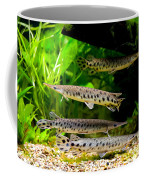 Four Aquarium Fishes In Zoo Coffee Mug