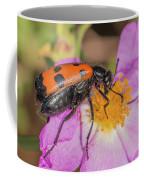 Four-spotted Blister Beetle - Mylabris Quadripunctata Coffee Mug