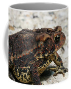 Fowler's Toad #2 Coffee Mug