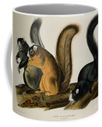 Fox Squirrel Coffee Mug by John James Audubon