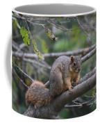 Fox Squirrel On A Branch  Coffee Mug