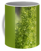 Foxtail Fern In Spring Coffee Mug