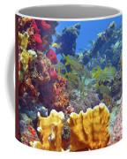 French Reef 1 Coffee Mug