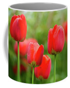 Fresh Spring Tulips Flowers With Water Drops In The Garden  Coffee Mug