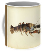 Fresh Water Crayfish Unsigned Sketches Attributed To William Buelow Gould Coffee Mug
