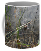 Frog Home Coffee Mug