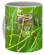 Frog Playing Hide N Seek Coffee Mug