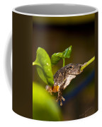 Frogs Life Coffee Mug