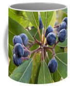 Fruit And Leaves Of The Red Bay Coffee Mug