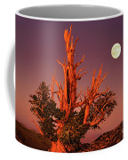Full Moon Behind Ancient Bristlecone Pine White Mountains California Coffee Mug