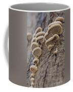 Fungui Growing On A Tree Trunk Coffee Mug
