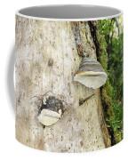 Fungus Grows On A Tree Trunk Coffee Mug