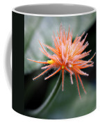 Fuzzy Orange Coffee Mug