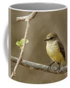Galapagos Flycatcher - Isabela Island, Galapagos Coffee Mug