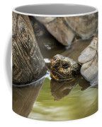 Galapagos Giant Tortoise In Pond Behind Another Coffee Mug