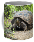 Galapagos Giant Tortoise Walking Down Gravel Path Coffee Mug