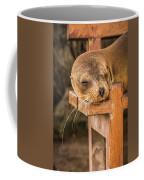 Galapagos Sea Lion Sleeping On Wooden Bench Coffee Mug