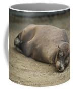Galapagos Sea Lion Sleeps On Sandy Beach Coffee Mug