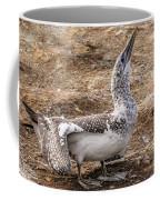 Gannet Chick 1 Coffee Mug