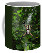 Garden Spider Coffee Mug