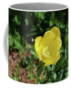 Garden With Beautiful Flowering Yellow Tulip In Bloom Coffee Mug