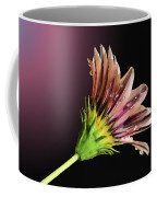 Gazania On Dark Background 2 Coffee Mug