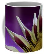 Gazania Petals Coffee Mug