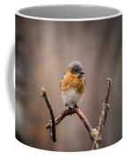 Gazing Eastern Bluebird Coffee Mug