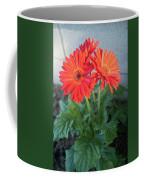 Gerber Sunrise Delight Coffee Mug