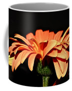 Gerbera Daisy On Black Coffee Mug