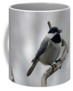 Getting Ready To Crack - Black-capped Chickadee Coffee Mug