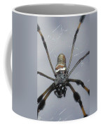 Getting To Know A Golden Orb Weaver Coffee Mug