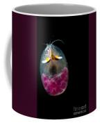 Giant Ostracod Coffee Mug