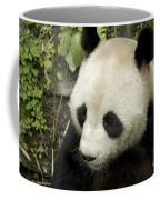Giant Panda At Rest Coffee Mug