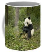 Giant Panda Eating Bamboo Coffee Mug