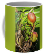 Giant Spider Lily - After The Flowers Are Gone Coffee Mug